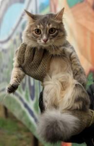 Конькова Елена Викторовна выбросила свою кошку Беню