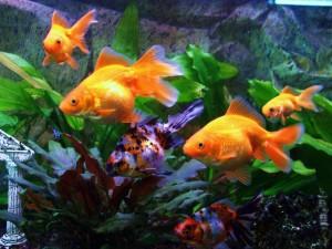kartinki24_fish_0016_2