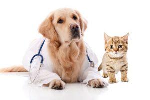 veterinarnaya-klinika-volkservis
