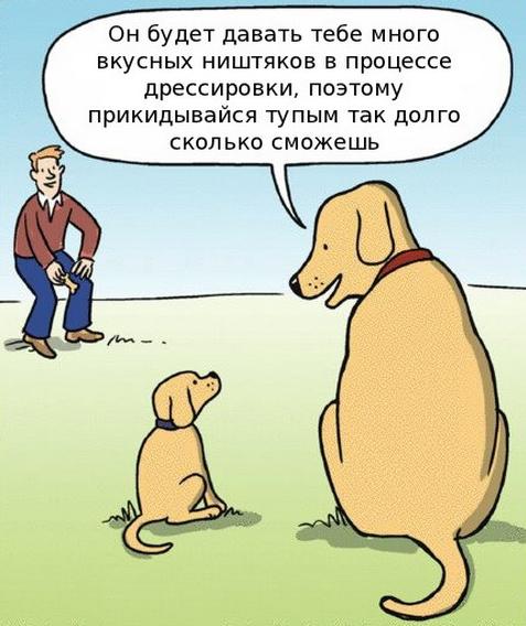 Груминг для собак на кантемировской