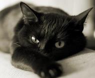 Стерилизация кошек когда лучше делать - 13a