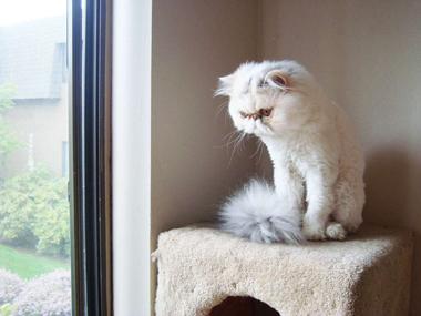 Передержка кошек цены