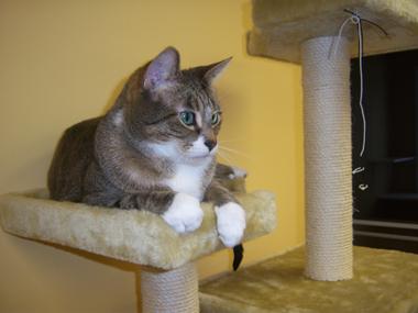 Демодекоз у кошек: лечение 5