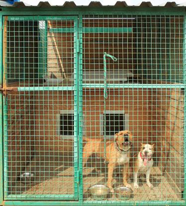 Летние вольеры для собак