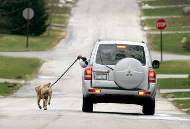 Прогугка с собакой