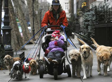 Выгул собак за деньги в Москве