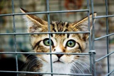 Сдать бездомного кота