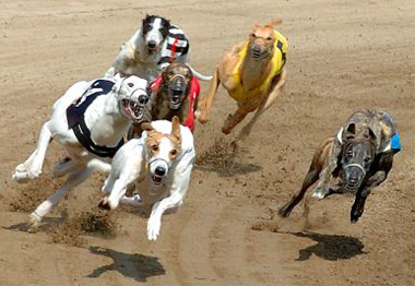 Картинки по запросу Фаст-трек собака