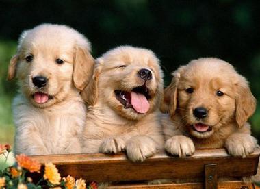 Выбор здорового корма для собаки