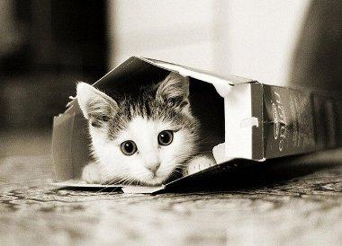 Чаще всего кошки подвержены заражению